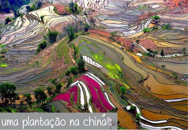 gcom_fotografia_visao_passaro_08