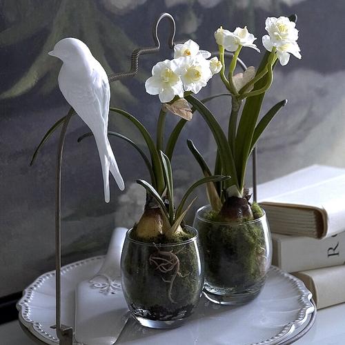 narcissi-pair-1458-p.1301575909