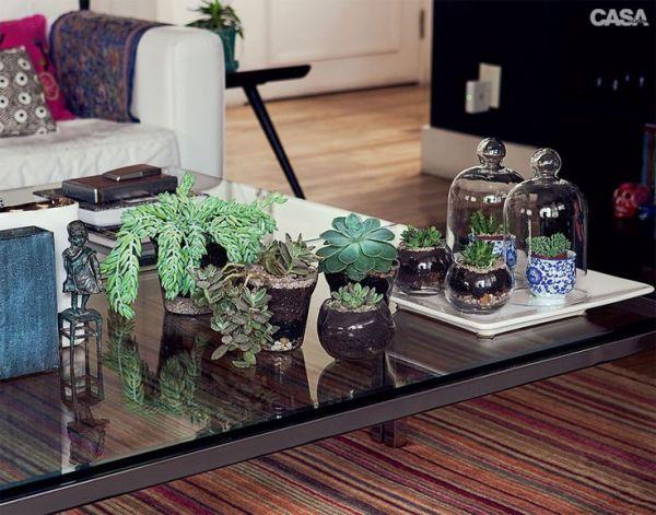 Plantas-suculentas-na-decoração-9