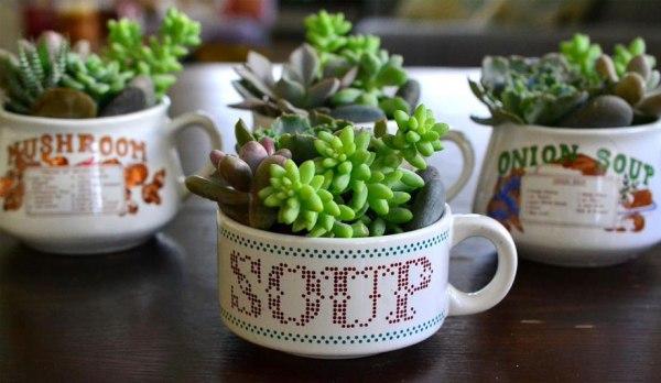 suculentas-plantas