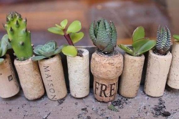 como-plantar-suculentas-em-rolhas-1